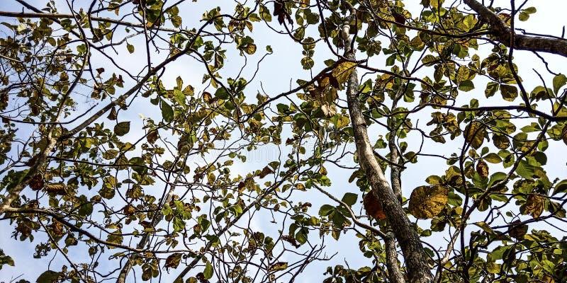 Tków liście i jasny niebo fotografia stock