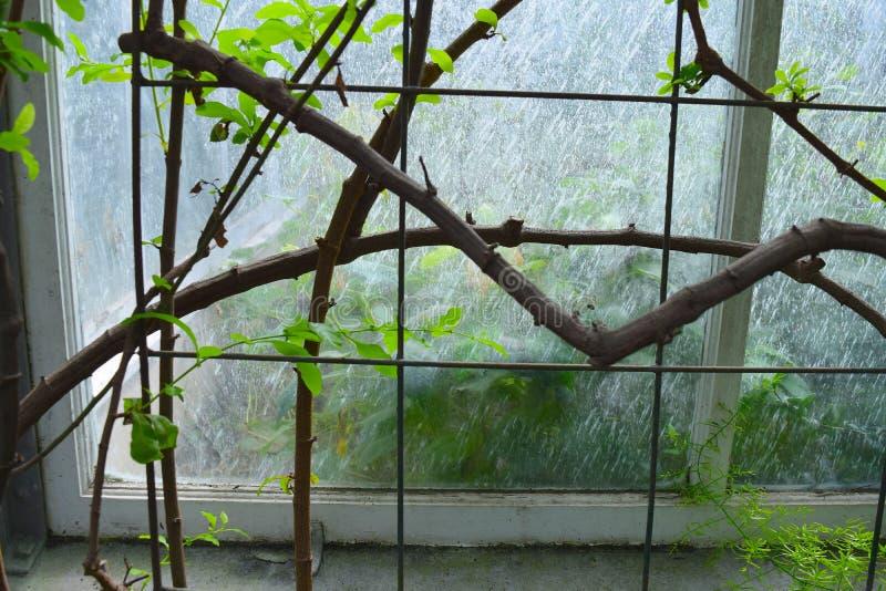 Tkane gałąź na metalu drutu matrycy z nadokiennym tłem zdjęcia stock