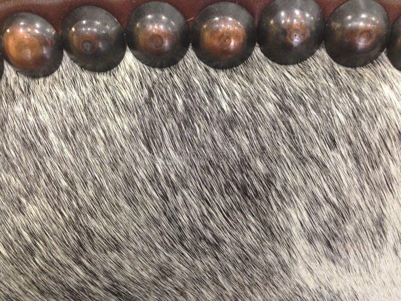 Tkanina, Koński włosy i mosiężni halsy, zdjęcia royalty free