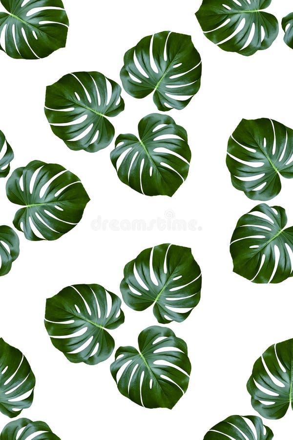Tkanina wzór z palmą opuszcza na białym tle ilustracji
