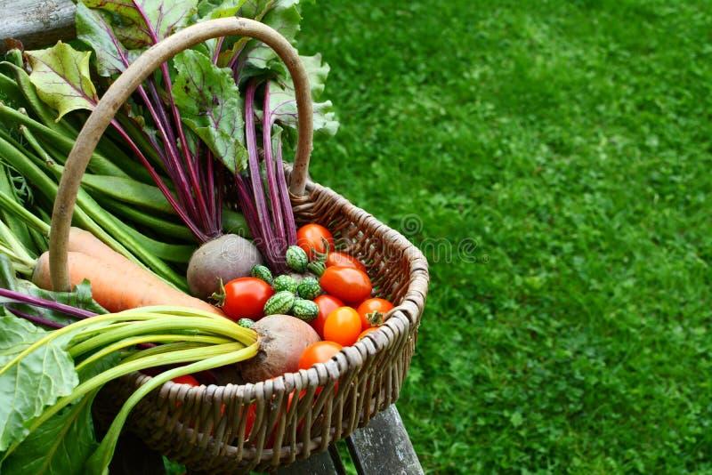 Tkany kosz wypełniał z świeżo zbierającymi warzywami od al zdjęcia royalty free