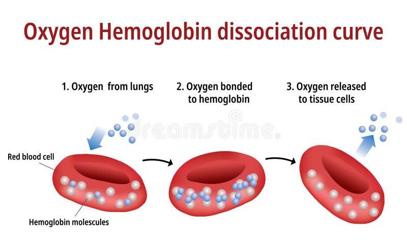 Tlenowa hemoglobiny dysocjacji krzywa - Wektorowa ilustracja ilustracji
