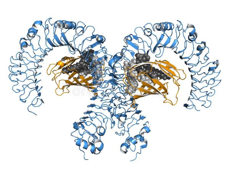 TLR4 tol-als receptor, beeldverhaalmodel royalty-vrije illustratie