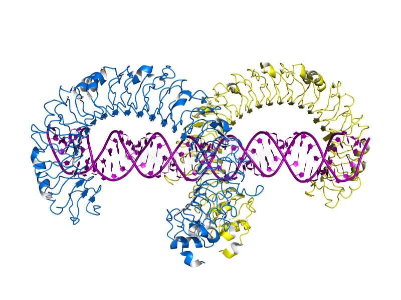 TLR3 tol-als receptor verbindend aan RNA, beeldverhaalmodel royalty-vrije illustratie