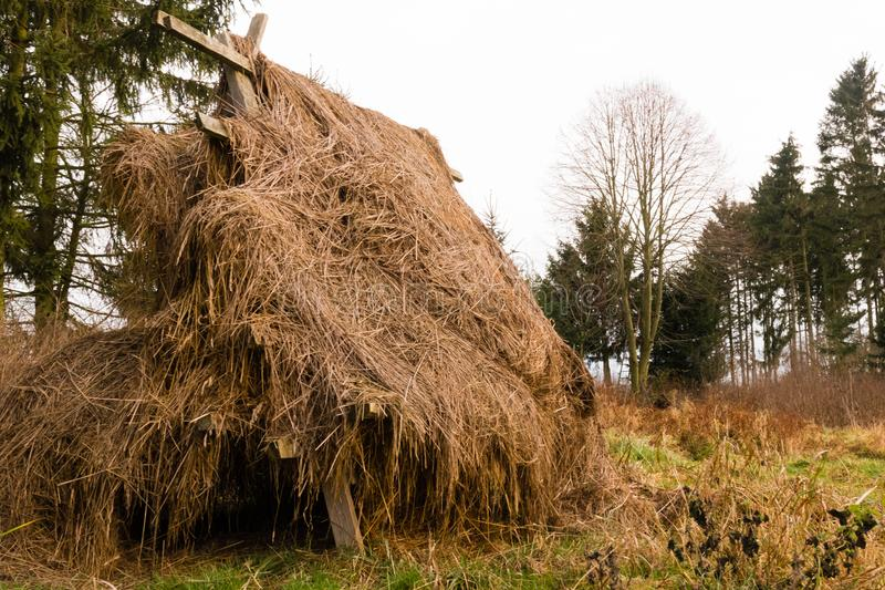 To dry grass in conventional method. Single hey pile dried in a conventional method stock image