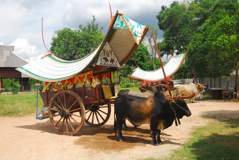 Bullock cart ride. To experience this bullock cart ride, travellers need to go to Telok Mas, which is half an hour away from Melaka city centre by car royalty free stock photos