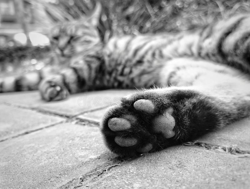 Cute Cat feet close up. To give a cat feet a close-up on stair royalty free stock photos