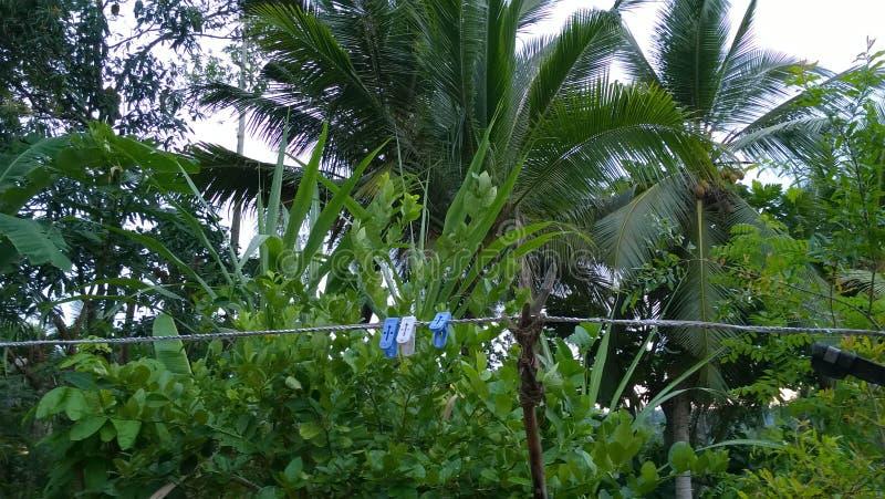 To jest Lasowi Coronet drzewa obrazy royalty free