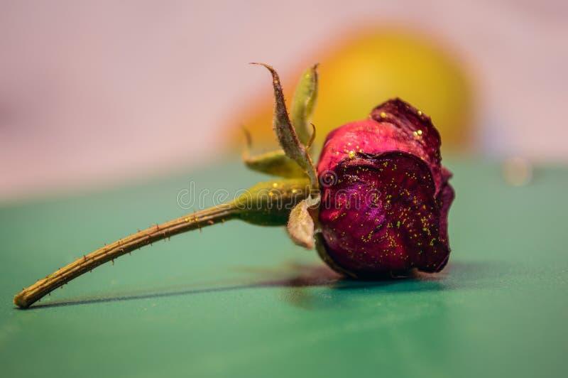 To jest Różany przy stołem obraz royalty free
