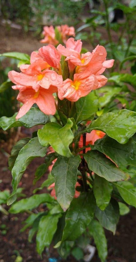 To jest unikalny i domowy ogrodowy uroczy kwiat obraz royalty free