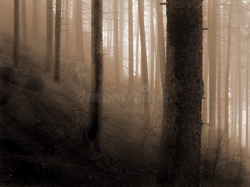 To the light. From a dark forest, going to a light trough a heavy fog stock images