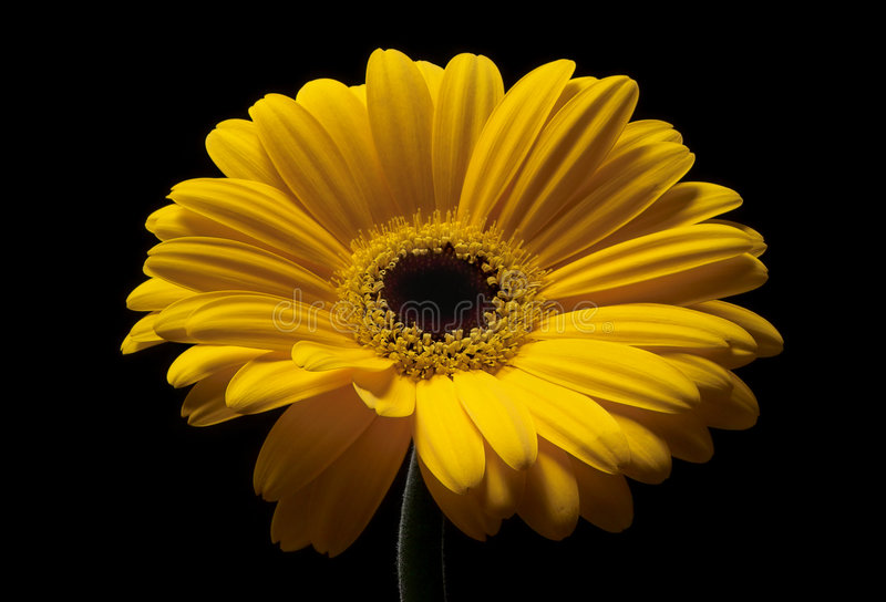 Download To the light II stock image. Image of flower, summer, petal - 192409