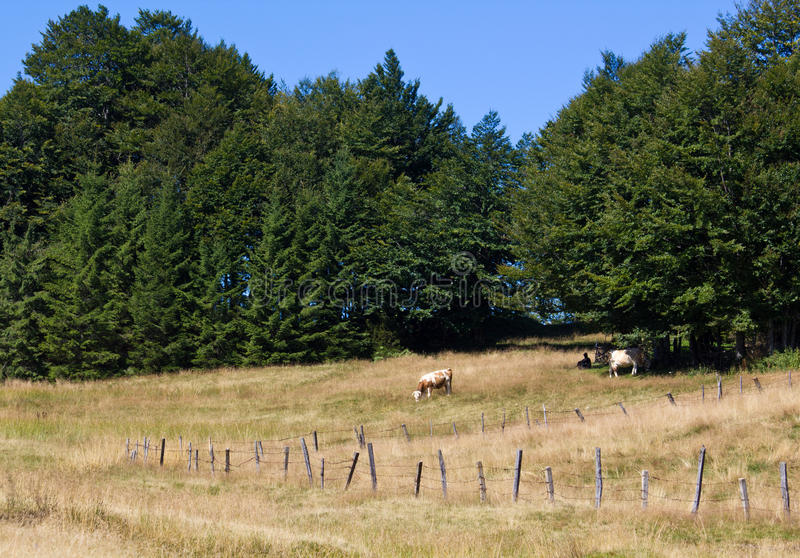 To Pasture Stock Photography