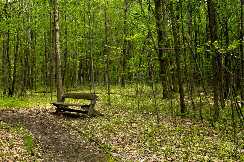 Download To Rest Along the Path stock image. Image of middle, wood - 92884531