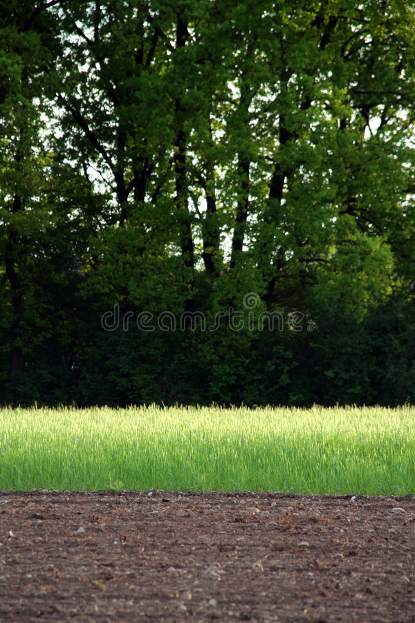 To rotate crops. Agriculture field ready for sowing and present rotate crops royalty free stock photo