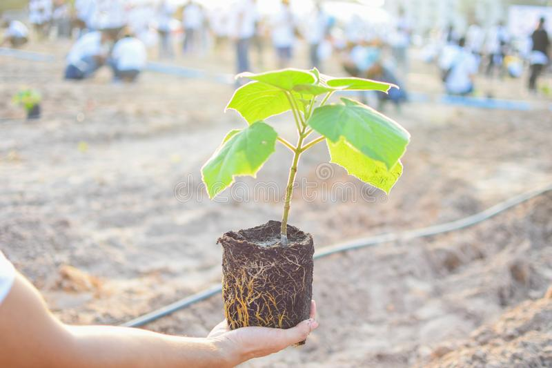 To start planting trees of people. To start planting trees natur new stock photography