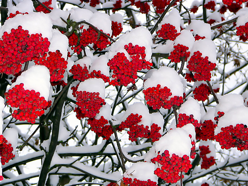 To us is warmer under snow royalty free stock photo