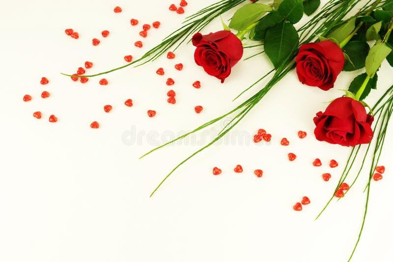 to walentynki dni Rama piękne czerwone róże zdjęcia royalty free