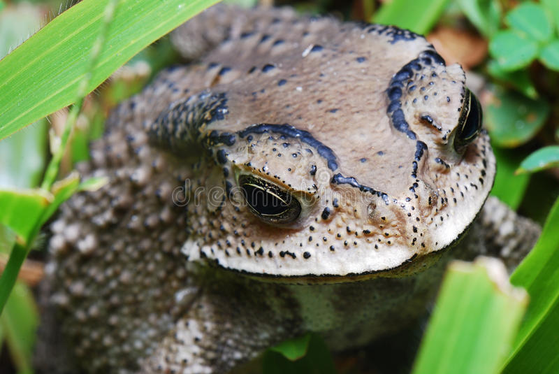 Download Toad stock photo. Image of ecology, mammals, venom, grass - 21969626
