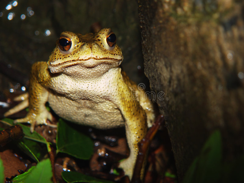 Download Toad stock image. Image of marsh, zhongshan, toads, swamp - 3325431
