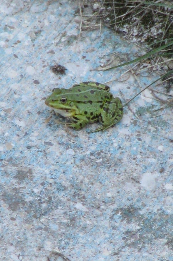 Toad Free Public Domain Cc0 Image