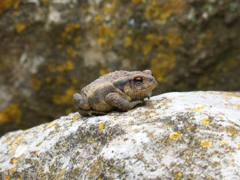 Images - Public Toad