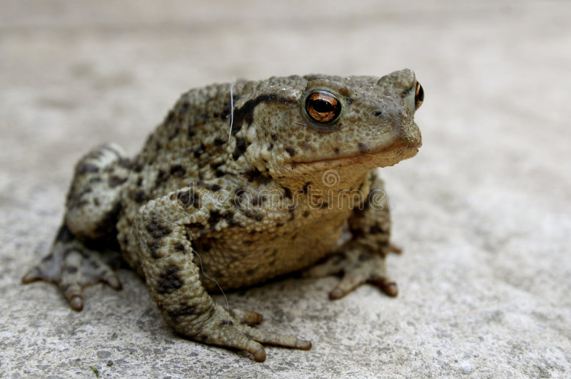 toad patio fotografia stock