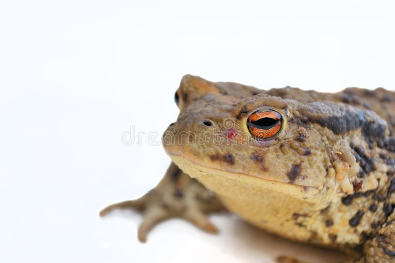toad on the road stock photo image of head green brown 24671780