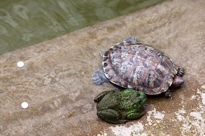 Toad and turtle royalty free stock images