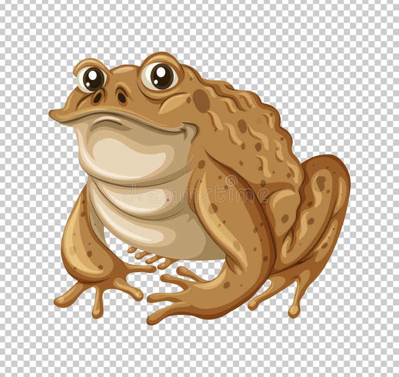 Free Toad With Brown Skin Royalty Free Stock Images - 92327799