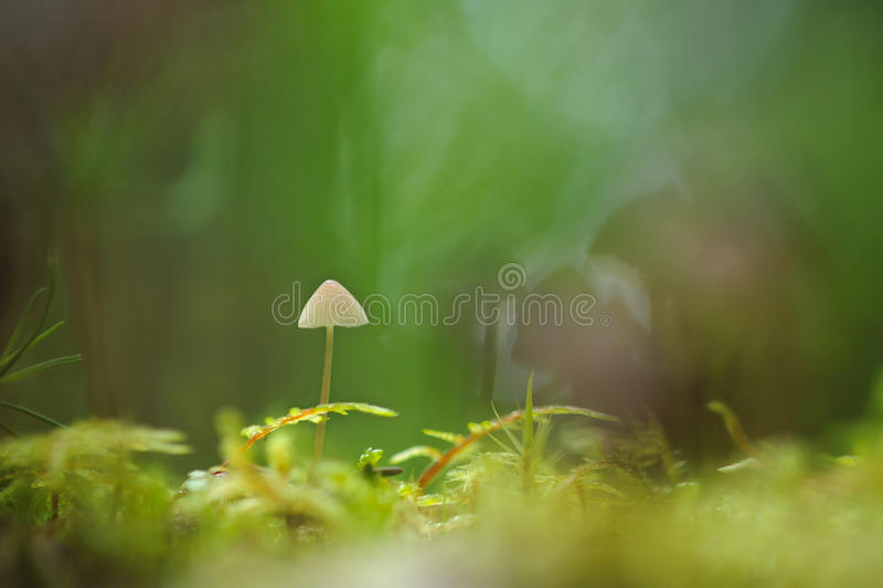 toadstool stock foto