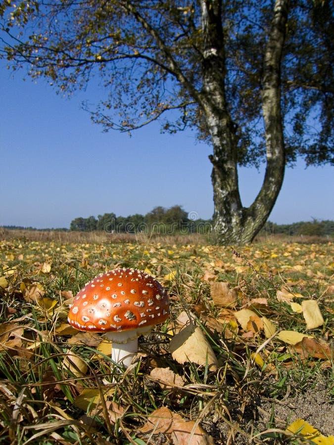 Download Toadstool en otoño foto de archivo. Imagen de amarre, árbol - 7283280