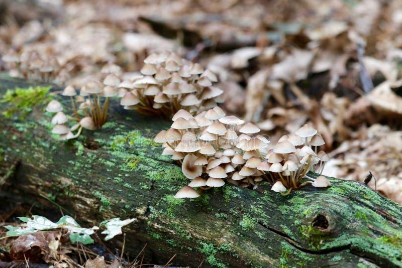 Toadstools στο δάσος στοκ εικόνες