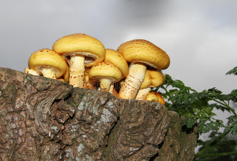 Download Toadstools stock image. Image of bright, fungus, growing - 16902963