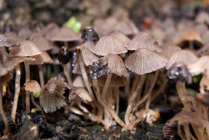 Download Toadstools stock photo. Image of natural, fungus, magic - 22371360