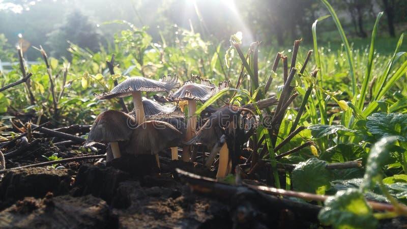 toadstools stock foto