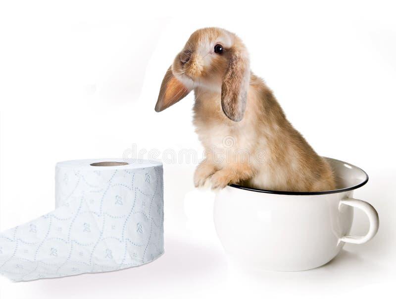 Toaletowy królik obraz royalty free