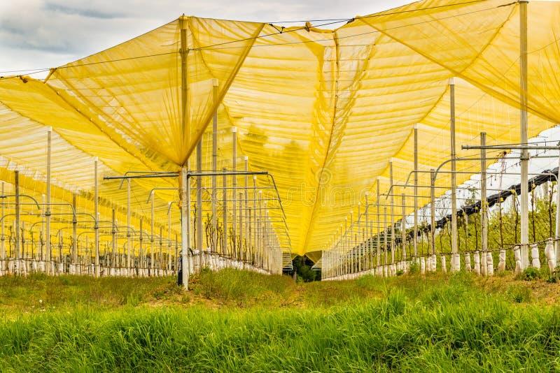 Toalhas amarelas da saraiva fotos de stock royalty free