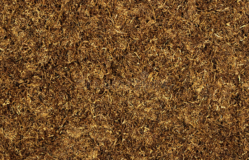 Download Tobacco stock photo. Image of leaves, ground, cancerous - 505138