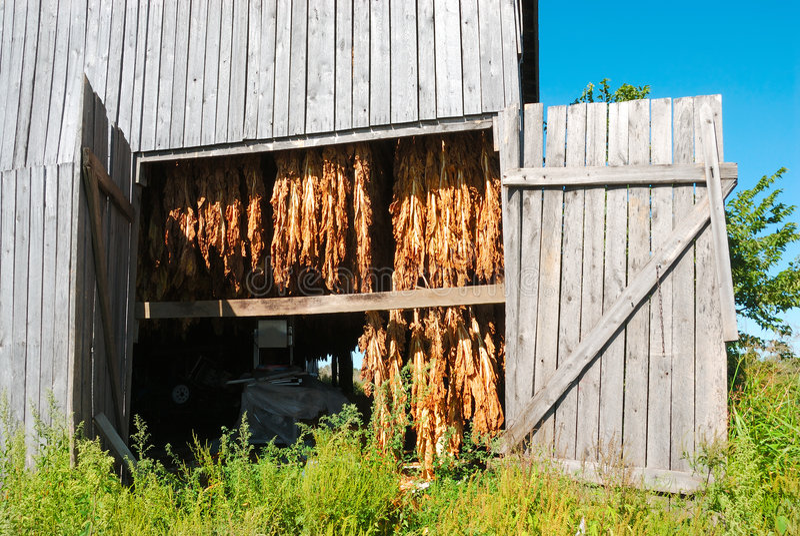 Tobacco Barn in Kentucky USA stock photo