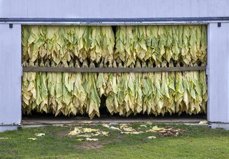 Download Tobacco Drying stock image. Image of smoke, farming, leaves - 36158591
