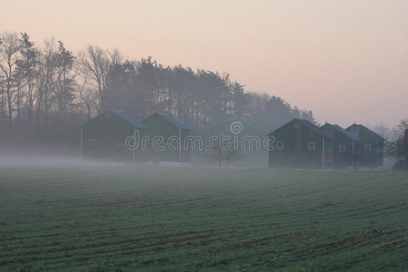 Tobacco Kiln. Old tobacco kiln early spring misty morning royalty free stock image