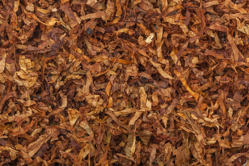 Tobacco texture. High quality dry cut tobacco big leaf, close up, background stock images