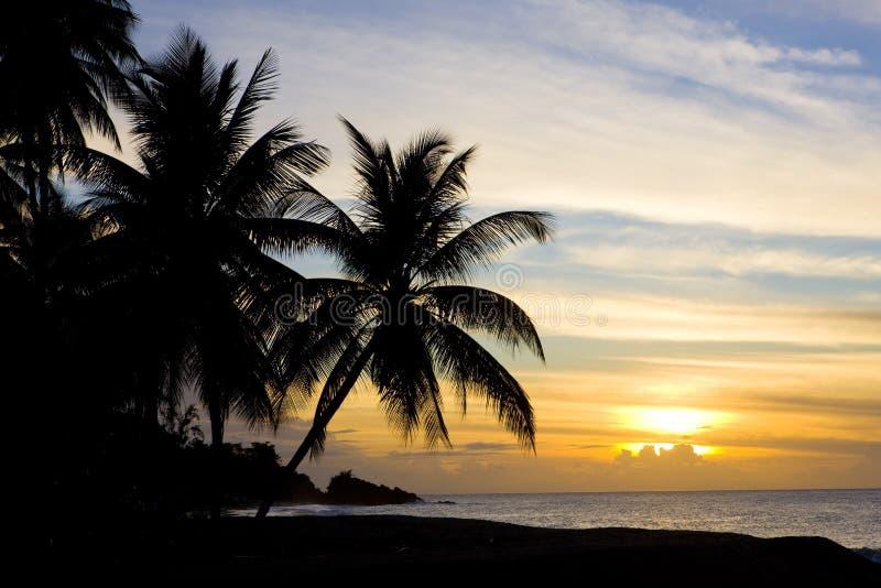 Tobago stockbilder
