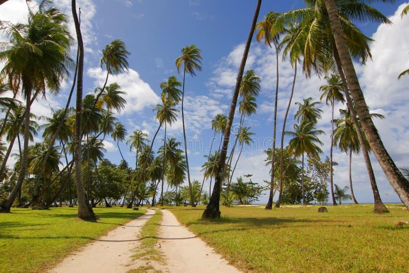 Tobago palms stock image