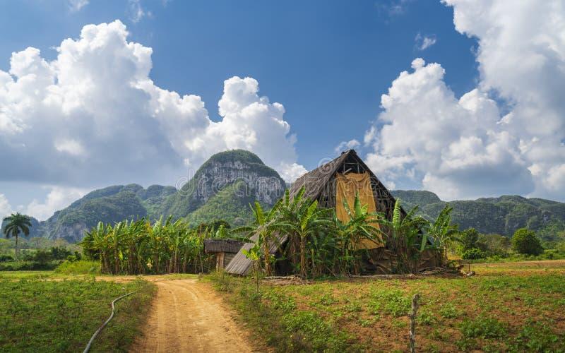 Tobakfält i den Vinales nationalparken, UNESCO, Pinar del Rio Province arkivfoto