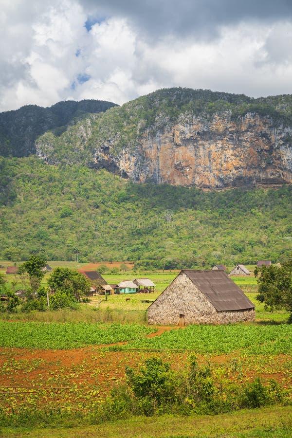 Tobakfält i den Vinales nationalparken, UNESCO, Pinar del Rio Province royaltyfri foto