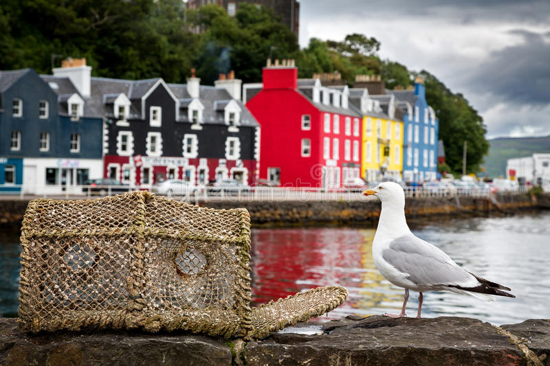 Tobermory seagull. Selective focus on a seagull on the quayside, with the colourful village of Tobermory in the background. Isle of Mull, Scotland, UK royalty free stock photography
