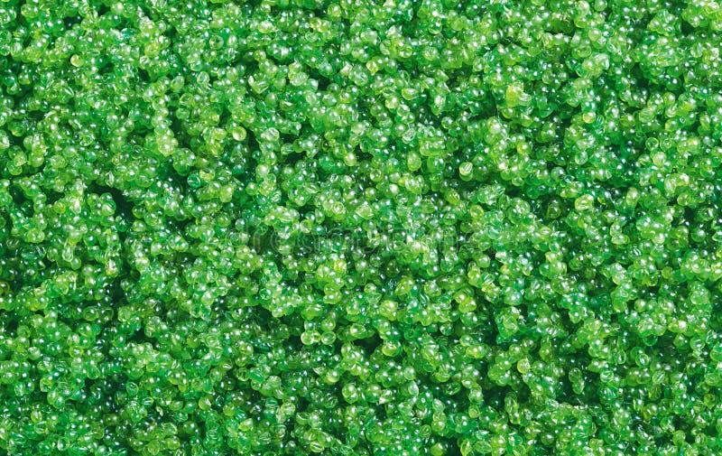Tobiko πράσινο στοκ φωτογραφίες