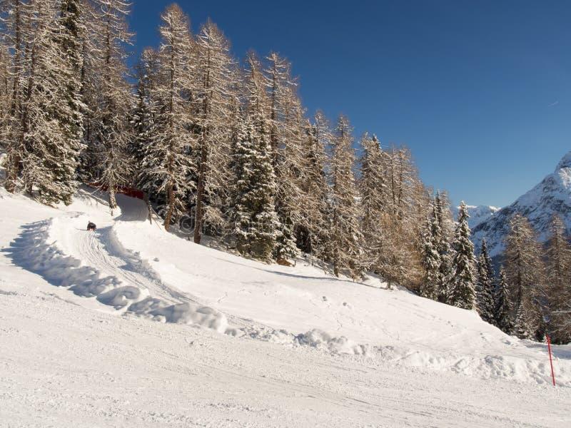 Download Toboggan, который побежали в лесе зимы Стоковое Изображение - изображение насчитывающей bluets, alpines: 40586309